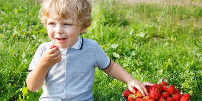 Happy little toddler boy on pick a berry organic strawberry farm ** Note: Soft Focus at 100%, best at smaller sizes